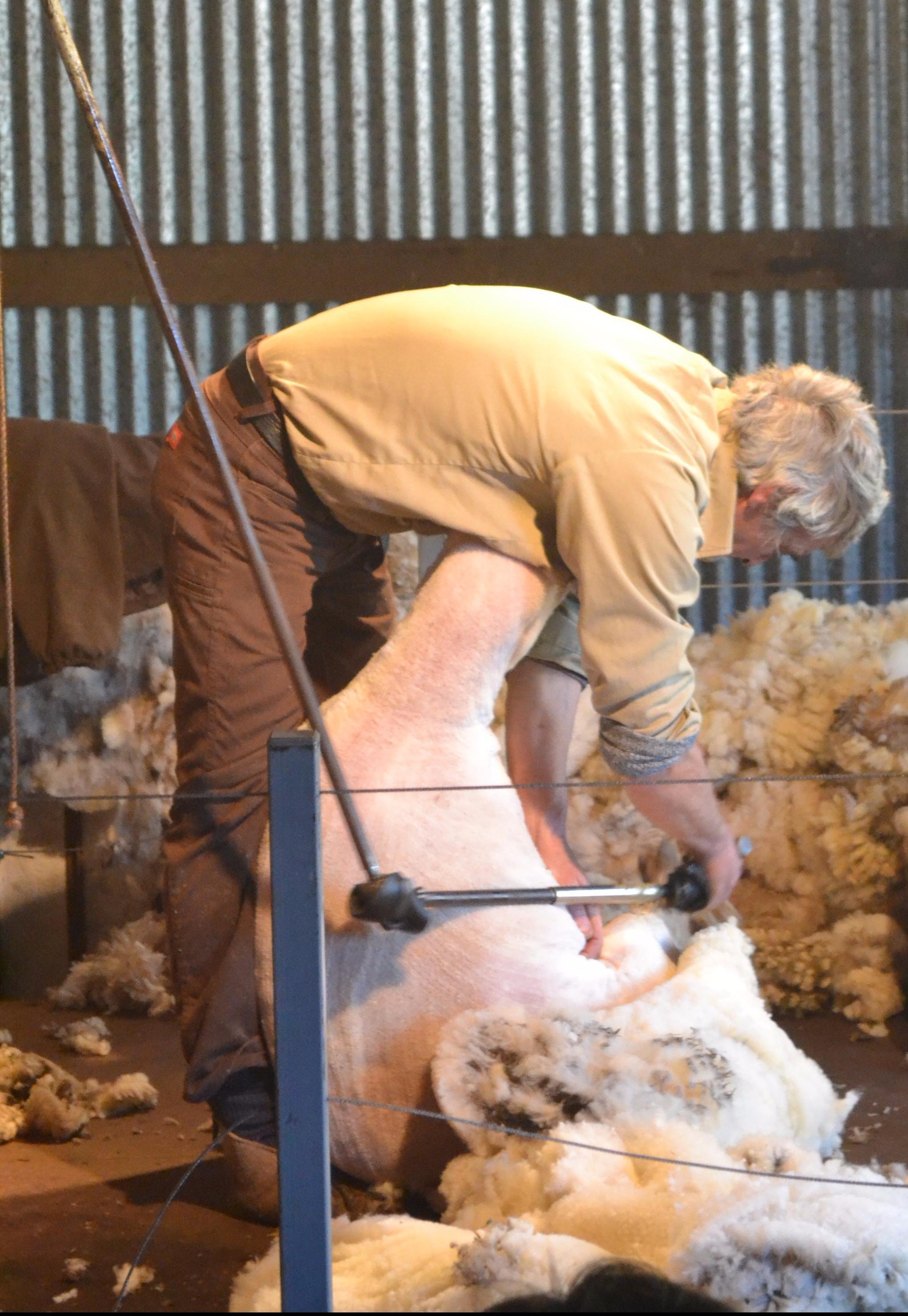 24-sheep-shearing1-e1495882684284.jpg